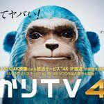 ひかりTV、「4K-IP放送」を11月30日から開始