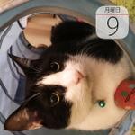 """""""スイーツ感""""増量!「明星、一平ちゃん夜店の焼そば チョコソース」発売:今日は何の日"""