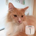 新年! 丸亀製麺「ラフテーうどん」期間限定発売:今日は何の日
