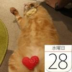 丸亀製麺、豪快な「大海老うどん」限定発売:今日は何の日