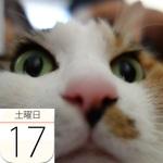 新千歳「雪ミク スカイタウン」に新商品登場!:今日は何の日