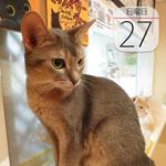 ロッテリアの2000円「松阪牛ハンバーガー」限定発売:今日は何の日