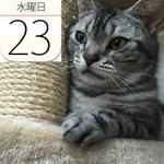 ポムポムプリンカフェ名古屋進出!かわいくて食べられない味噌カツも:今日は何の日