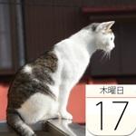 北海道限定「ピンクなブラックサンダー プレミアムいちご味」発売 :今日は何の日