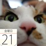 タリーズコーヒー京都エリア限定「宇治抹茶ラテ」など:今日は何の日