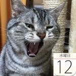 スターバックス地域限定グッズ「ジャパン ジオグラフィーシリーズ」発売:今日は何の日