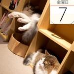 「听(ポンド)」神谷町店で熟成和牛の限定ステーキ重ランチ:今日は何の日