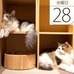 宇多田ヒカル8年半ぶりのニューアルバム発売:今日は何の日
