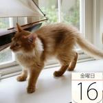 銀座コージーコーナー「にゃんカップ」ハロウィン向けに発売:今日は何の日