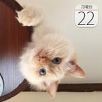 食べ過ぎ注意! 中華調味料「味覇」カップ麺が登場:今日は何の日
