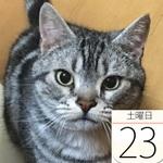 JR東日本の「ポケモン謎解きラリー」スタート:今日は何の日