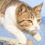 ぎゃんかわ「飛び猫」ネットで話題に 五十嵐健太さん