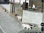 グーグル、「猫の日」記念のストリートビューで見られる猫紹介