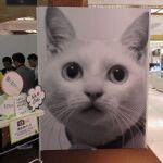 珠玉のネコ写真・動画が見られるニャン!日本橋三越で猫フェス開催中