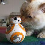 5月4日だからBB-8と猫と「スター・ウォーズ/フォースの覚醒」を観た(ネタバレなし)