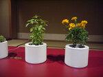 植物を通して絆を育てるIoT植木鉢planty