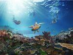 オーストラリア政府観光局、VRを用いたプロモーション「絶景大陸 オーストラリア」キャンペーンを開始