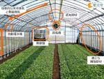 低コストでIoT活用の自動環境制御・耐風圧設計ビニールハウス、SenSproutらが開発開始