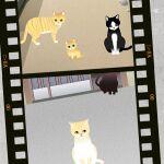 猫屋敷に潜り込んで写真を撮ろう―注目のiPhoneアプリ3選