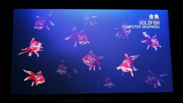 このような金魚も飛び出して見える