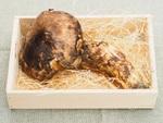 プロにきいた松茸の超おいしい食べ方