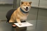 柴犬まる部長 肉球で書類を承認