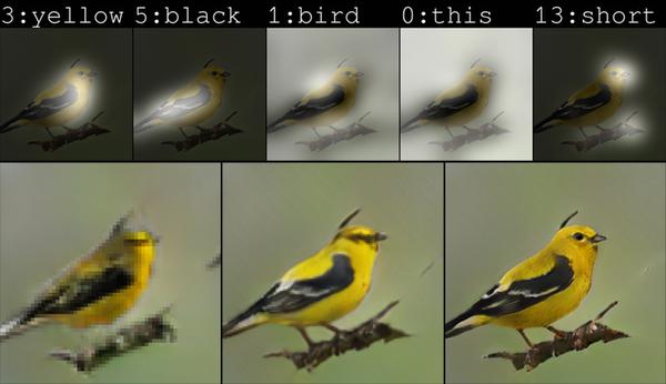 が 黄色い くちばし 野鳥図鑑(身近な鳥)