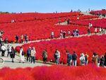 360Channel、鮮やかな草花の景色を体験できる360度動画を公開