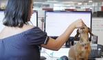 アマゾンはなぜ会社に犬を連れていけるのか