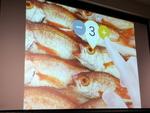 指タップで魚市場の鮮魚が買える「UOICHI」が面白すぎた