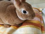 ウサギがだんだん慣れて来て可愛さ倍増です!