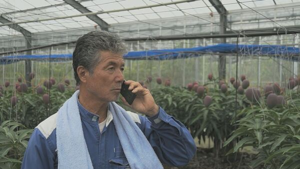畑の異常を電話で通知、KDDIウェブが沖縄で実証実験