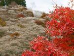 食と歴史と文化の国「愛知県」に行く