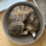 フォトジェニックな猫を撮るなら冬しかない!