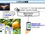 スマホで梨の病害を予測・防除支援をする実証実験