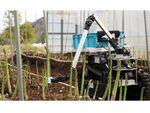 inaho、自動野菜収穫ロボットのサービス提供を開始