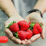 もっとも旬な果物が生産者から直接届くサービス