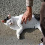 富士フイルム「X-A7」と16-80mmレンズで河川敷猫に会いにいく