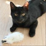 間もなく発売のニコン「Z 50」で味わい深い猫の写真を撮影