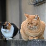 ニコン「Z 50」に望遠レンズを付けて遠目から猫を狙う!