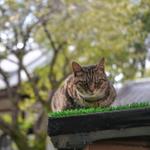 高性能より個性が目立った2019年のデジカメを猫写真で紹介