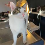 猫保護シェルターは猫の撮影方法が学べる