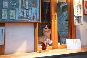 オリンパス「OM-D E-M1 Mark II」で窓辺の猫を撮る!