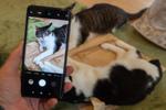 1億画素スマホ「Mi Note 10 Pro」は猫を撮るのも適している