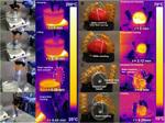 キモカワイイ!? 温度によって伸縮するソフトロボットをコーネル大学の研究チームが発表