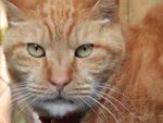 83倍ズームの「COOLPIX P950」で猫のドアップを撮るのが楽しい