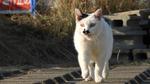 83倍ズームカメラ「ニコン COOLPIX P950」は猫認識機能もある万能カメラ