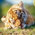 動物の赤ちゃんに癒されるAndroidアプリがイカス!