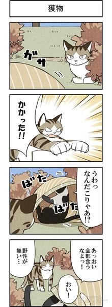 週アスCOMIC「我々は猫である」第16回