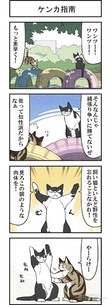 週アスCOMIC「我々は猫である」第25回
